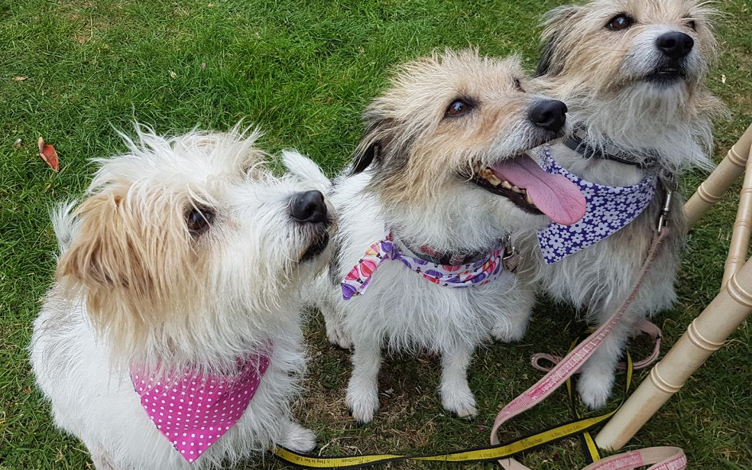 Family Fun Dog Show – Sunday 9th September